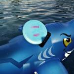 WhaleOnShark