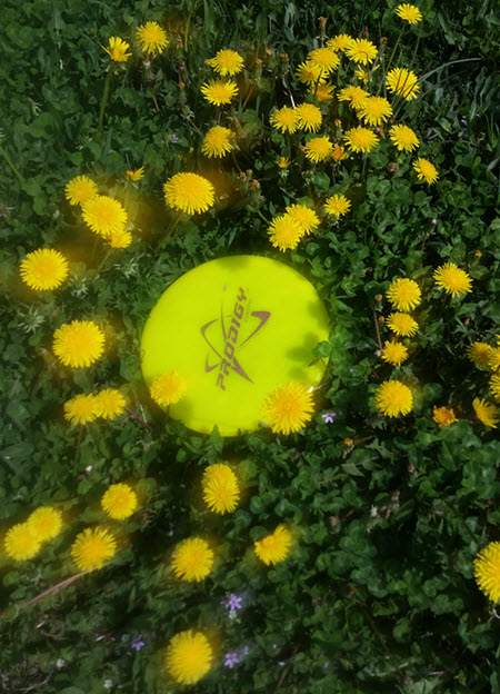 prodigy disc golf yellow dandelions field