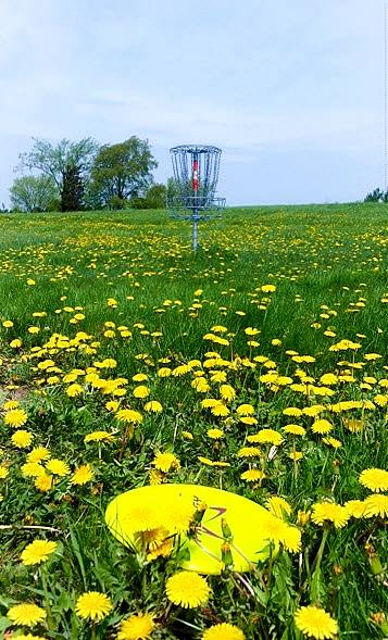MSU Disc Golf Course field