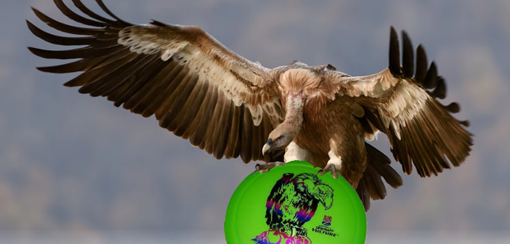 Discraft Vulture Review
